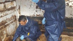 Depremde yaralanan hayvanlar tedavi edildi