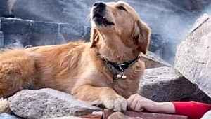 Elazığ depreminde, enkaz altında kalan kadının başında bekleyen köpek! Çaresizliğin fotoğrafı...