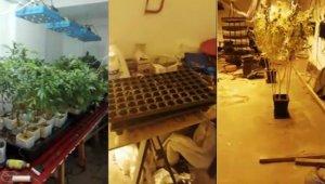 Evini kenevir tarlasına çeviren şahsa polisten operasyon