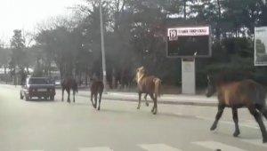 Otomobile bağladığı atları asfaltta metrelerce koşturdu - Bursa Haberleri