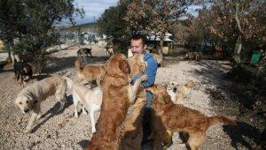 Sahipsiz köpek bırakmadı - Bursa Haberleri