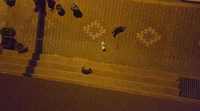 Sokak kedilerinin oyuncak kediyle imtihanı - Bursa Haberleri