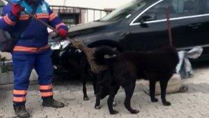 Temizlik işçisinden sokak köpeklerine süpürgeyle masaj