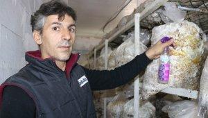 Vanlı mantar üreticisi yeşil küf ilacı yaptı