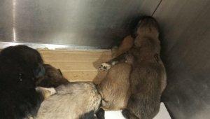 Yol kenarına atılmış çuval içerisindeki yeni doğmuş yavru köpekleri vatandaşlar kurtardı