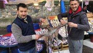 3 metrelik ahtapot ilgi odağı oldu - Bursa Haberleri