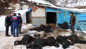 Ahır yangını: 245 keçi ve yavrusu telef oldu