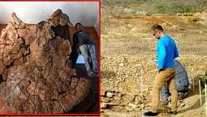 Araba büyüklüğündeki 7 milyon yıllık fosilin hangi canlı ait olduğu ortaya çıktı
