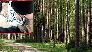 Babası ve amcası öldürmek için ormana götürdü, polis son anda yetişti