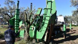 Gemlik Belediyesi'nin ağaç hassasiyeti - Bursa Haberleri
