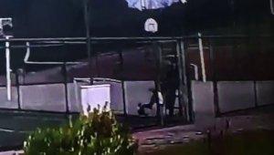 İstanbul'da köpeği defalarca tekmeleyen şahıs kamerada