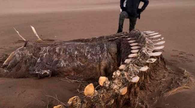 Karaya vuran devasa iskelet görenleri hayretler içinde bıraktı