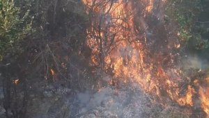 Samandağ'da zeytinlikte yangın