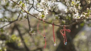 Ağaçlar Marteniçka açtı - Bursa Haberleri