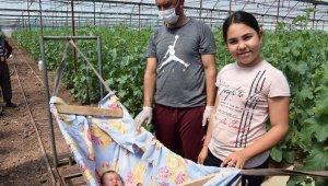 Herkes eve kapandı onların iş yükü arttı, bebekleriyle seralara taşındılar