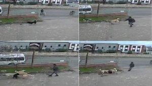 Köpeğe, köpekle işkence anı