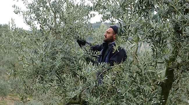 Köyün gençleri evden çıkamayan yaşlıların ağaçlarını buduyor - Bursa Haberleri