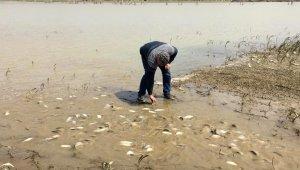 Tarladan balık topladılar - Bursa Haberleri