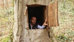 Ağaçkakan gibi asırlık ağaca sığındı, başına iş açtı