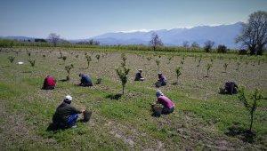 Bursa ovasında çiftçiler hasat yaptı, meyvelerini ilaçladı - Bursa Haberleri