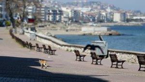 Bursa sahilleri kedi, köpek ve güvercinlere kaldı - Bursa Haberleri