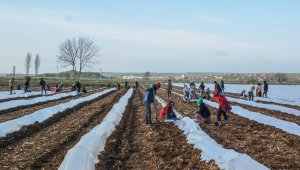 Bursa'da erkenci karpuz ekimi yapıldı - Bursa Haberleri