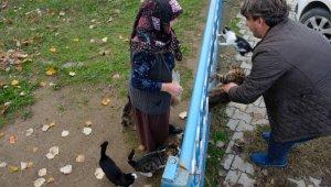 Bursalı fırıncı aç kalan köpek ve kedilere böyle sahip çıktı - Bursa Haberleri