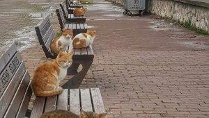 Deniz kıyıları kedilere kaldı - Bursa Haberleri