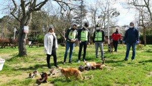 Mustafakemalpaşa'da sokak hayvanları unutulmadı - Bursa Haberleri