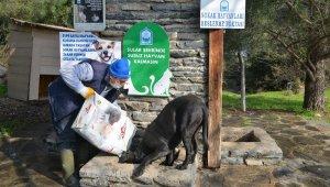 Sokak hayvanlarına korona desteği - Bursa Haberleri