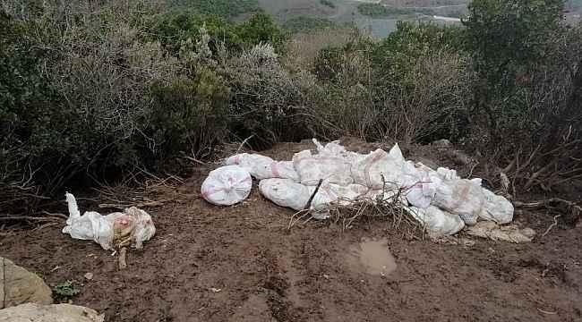 Tavuk ölülerini çuvala koyup araziye attılar - Bursa Haberleri