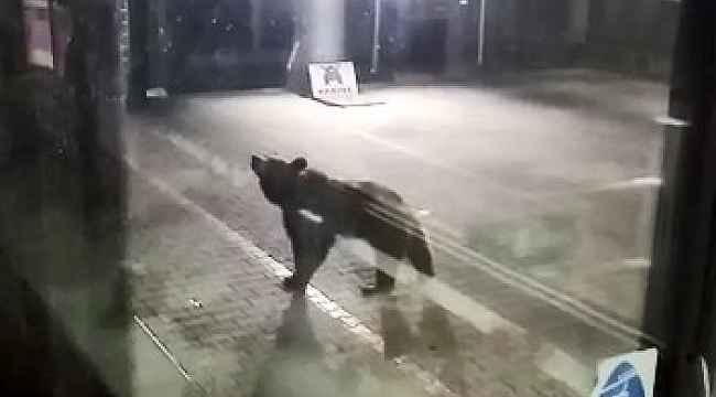 Aç kalan ayılar teleferiğe indi - Bursa Haberleri