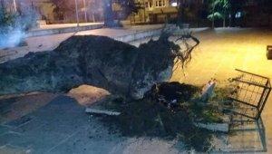 Asırlık çınar devrildi - Bursa Haberleri