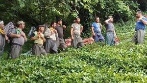 Çay işçiliğinin yevmiyesi artınca bahçelerde çalışma talebi çoğaldı