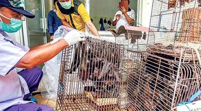 Çin, vahşi hayvan üretimini durduran çiftçilere para ödeyecek