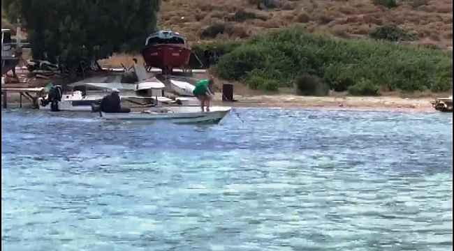 Denizde vahşet... Köpek balığını mızrakla defalarca vurarak katlettiler