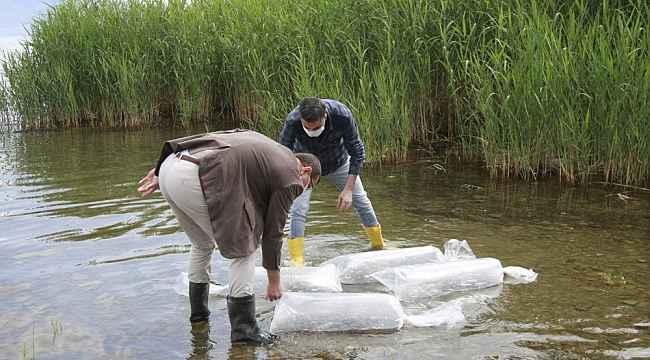 Göle 70 bin yavru sazan bırakıldı - Bursa Haberleri