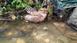 Hatay'da yaralı balık baykuşu kurtarılamadı