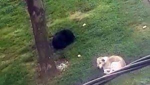 İşe giderken başıboş köpeklerin saldırısına uğradı