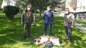 Kaçak salep soğanı toplayan 6 kişiye 461 bin TL ceza kesildi