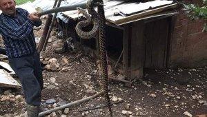 Kümesten 2,5 metrelik yılan çıktı - Bursa Haberleri
