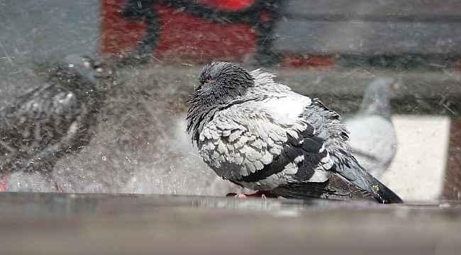 Meydanlar boş kaldı, yüzlerce güvercin böyle yıkandı - Bursa Haberleri