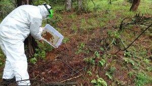 Mücadele için terminatör böcekler ormana salındı - Bursa Haberleri