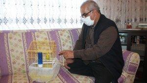 Muhabbet kuşundan vatandaşlara 'evde kal Türkiye' çağrısı