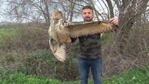 Nadir görülen yırtıcı kuşu ölümden kurtardı - Bursa Haberleri