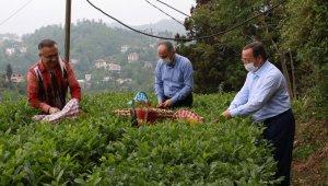 """Rize Valisi Çeber: """"Çay toplamak için gelmek isteyenlerin sayısı 36 bine, gelenlerin sayısı 7 bine ulaştı"""""""