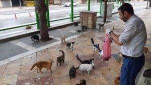 Sokağa çıkma yasağı yüzünden aç kalan kedileri ciğerle beslediler