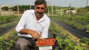 Terör bitti, Diyarbakır'da çiftçiler tarlaya indi