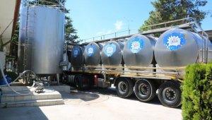 Amasya'da günlük 82 ton çiğ süt toplandı