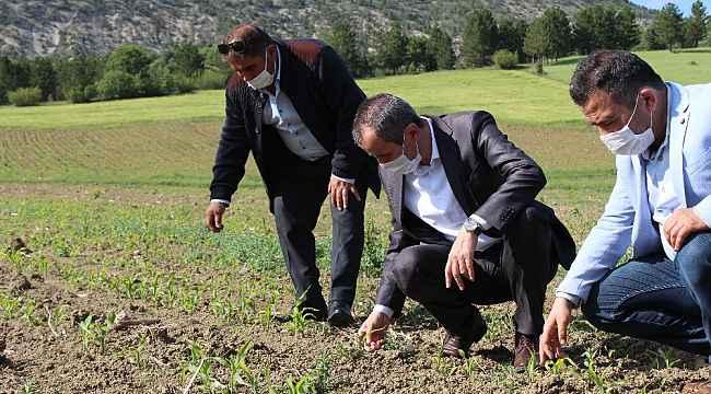 Ayvalık, Ovacık'taki tarlalarda incelemelerde bulundu